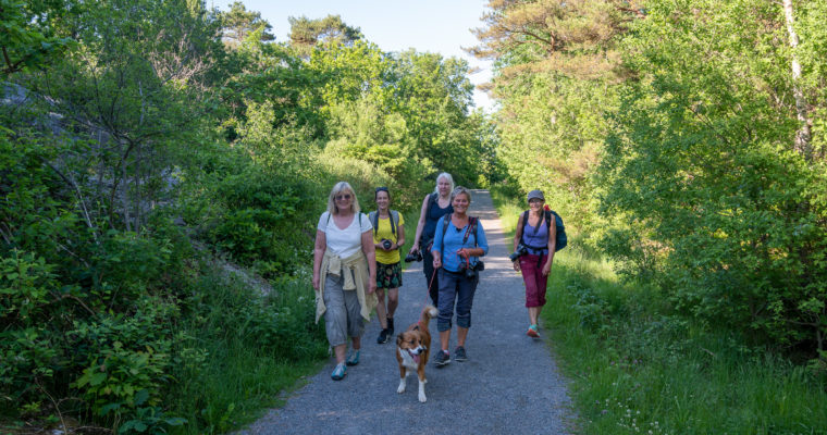 Fototur til Flekkerøya 14.06.20