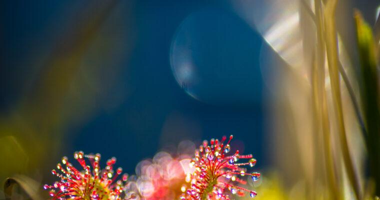 Månedens foto oktober 2020