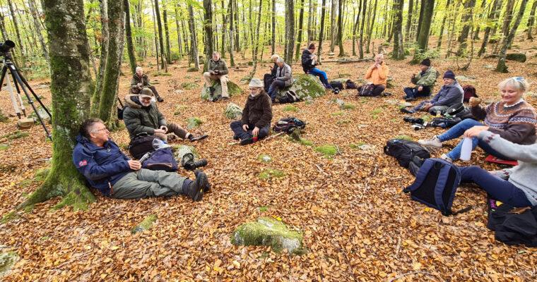 Tur til bøkeskogen ved Søm, Fevik, 16.oktober